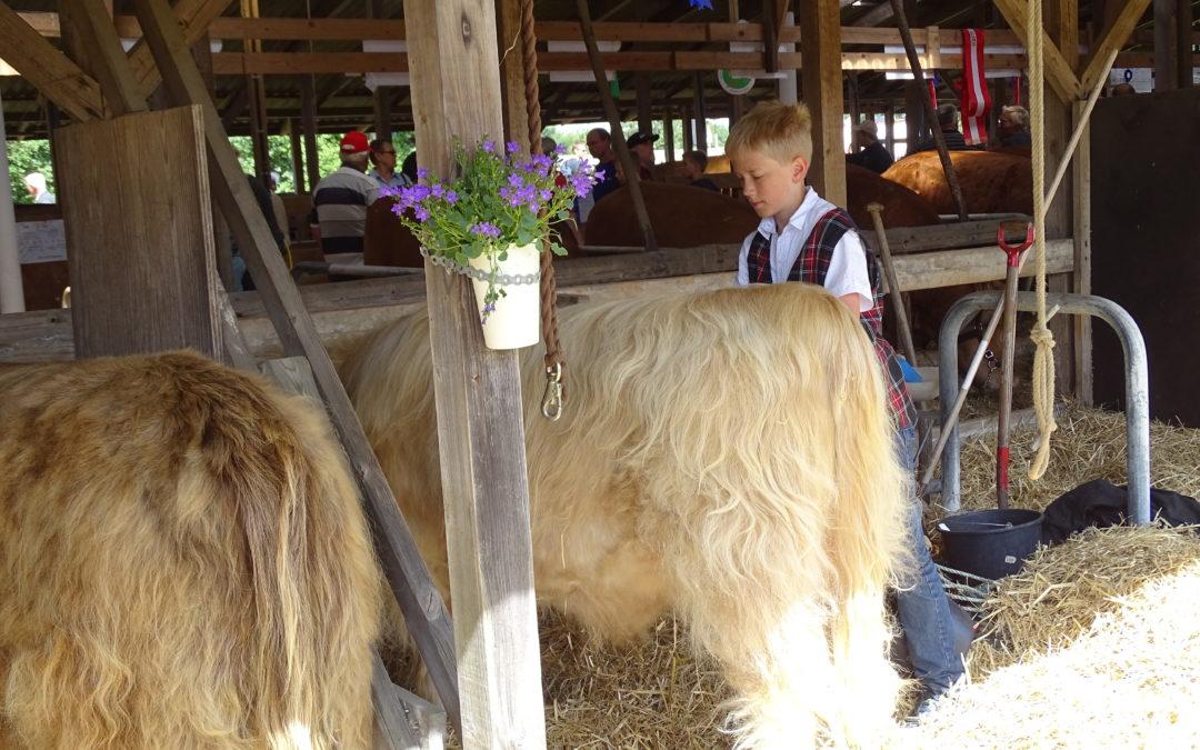 Kildegaarden Highland Cattle – Årgang 2016